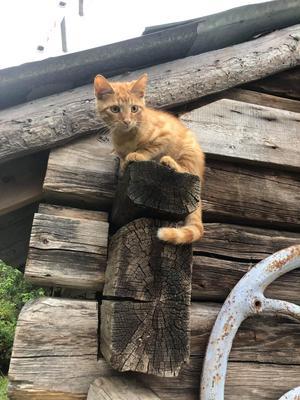 Katthjälpen i Sundsvall hjälpte Pernillas lilla kattunge hitta hem.