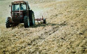 Jordbruket är ett exempel på att ju mer produktiv en sektor blir desto mindre betydelsefull blir den för vår BNP, menar artikelförfattaren. Foto: FREDRIK PERSSON