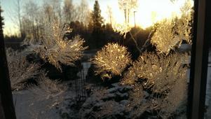 Morgonsol på iskristaller påminner om den stundande julen