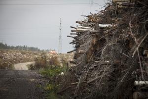 Ungefär 47 hektar skog har avverkats på det stora området i Horndal. Snart börjar anläggningen av en infartsväg till området.