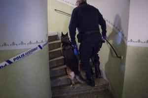 Efter Velmiras försvinnande spärrades flera utrymmen av i flerfamiljshuset. Däribland den lägenhet där polisen misstänker att Velmira bragts om livet. Utrymmena söktes igenom av polishund.