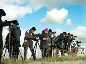 Vissa fågelskådare anser att Stornäset på Alnön är länets förnämsta flyttfågellokal.