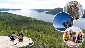 Storslagna utsikter längs kusten, vita tigrar på Junsele djurpark, klättring vid Skuleberget, samt hällristningar vid Nämforsen, är bara fyra häftiga upplevelser som finns i Höga Kusten-området.