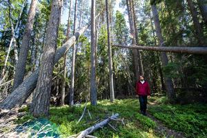 Oskar Norrgrann konstaterar att även omgivningarna har naturvärden, bland annat månghundraåriga tallar.
