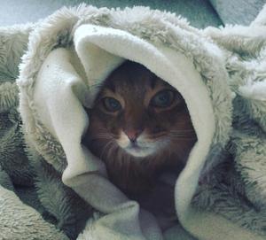 Lena Viklunds katt myser under vita snötäcket.