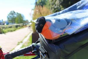 Den här lilla fågeln fick Jimmy av sin son för att följa med på resan.