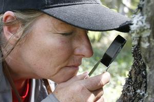 Med luppen i hand granskar Monika Norberg lav på en gammal stubbe.