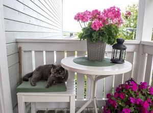 Hasse och de andra katterna ligger ofta ute på bron och vilar.