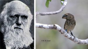 Man kan inte använda Darwins biologiska utvecklingslära som en elitistisk förklaringsmodell över sociala förhållanden i samhället, skriver Ingemar Berglund.