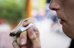 En ung man röker cannabis. Bild: Helena Landstedt / TT