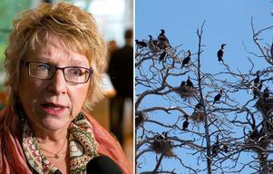 Ewa Lindstrand (S) är starkt kritisk till att länsstyrelsen inte tar krafttag mot skarven.