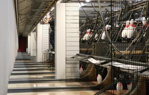 En elektriker kollar elsystemet vid maskinerna som tar emot käglor och klot.