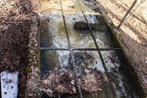 Fria vandringsvägar i form av utrivna dammar är billigare och bättre lösningar än fisktrappor som den i Strömsbruk bedömer konsulten Anders Bruks.
