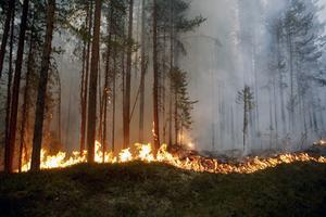 Bild från skogsbranden vid Kårböle strax utanför Ljusdal. Skogen som förstörs i branden kostar många miljoner kronor.