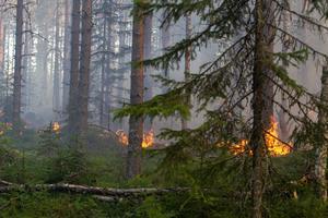 En skogsbrand pågår i närheten av golfbanan i Furudal. (Bilden tagen i samband med annan brand).