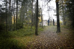 ... och står man kvar på exakt samma plats och vrider huvudet åt andra hållet skymtar höghusen i Fornbacken/Fornhöjden.