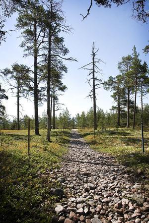 Stigen genom Snäckens naturreservat.