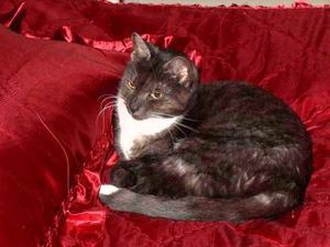 Min härliga katt Stina, 10 år gammal ! Hade fått en tuff början i livet och var fem månader gammal då hon via katthemmet kom till oss. Bild: Kaarina Kylmäluoma