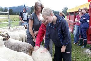 Stephanie Cassel, höger, Ingrid Jarlebring, mitten, och Erik Persson, höger, samtalade under fredagskvällen om får och lammproduktion. Här mäter de en tackas hull med bara handen.