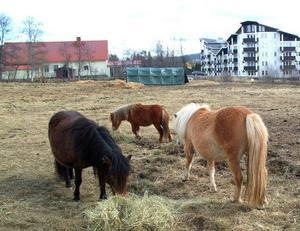 Lägdan bakom Duveds föreningshus och Hotell Renen har tidvis använts som beteshage för hästar. Men nu vill en exploatör bygga bostäder och handel på tomten.Foto: Elisabet Rydell-Janson