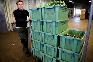 Andreas Nilsson kör ut tulpanerna till förpackningsbordet.