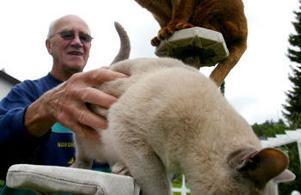 Rune Bergman tillsammans med sina katter.