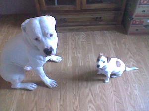 Här e Pancho o Ronja.Dom e bästa vänner fast det är den lilla hunden som bestämmer.