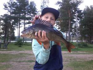 Alvin Subäck med abborre på 1,520 g, fångad i Lilla Ängersjön.