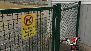 En hund ska ha gått till attack mot ett barn vid ett förskola i Örebro. Notera att bilden visar inte förskolan där attacken skedde.