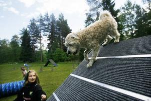 Mathilda Holm, tio år, trivdes på daglägret med sin softis Alis.