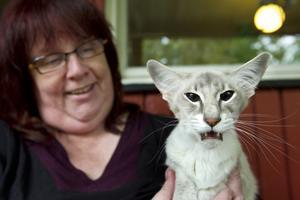 Hemma igen. Marina Walströms katt Medora är hemma igen efter att ha varit på rymmen i två veckor.Foto: Margareta Andersson