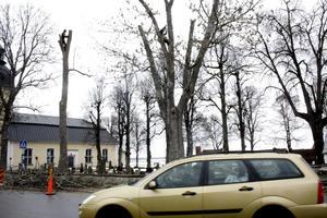 Vad är det som händer här? Förbipasserande bilister fäste ögonen på trädkronorna där arboristerna var fullt sysselsatta med både handsåg och motorsåg. Bild: JAN WIJK