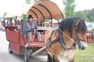 Hästskjuts är ett trivsamt sätt att ta sig fram på kustvägen. Freddy Hall med ardennern Mullen bjöd på tur i Mellanfjärden.
