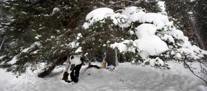 Foderplats. Här får djuren mat i vinterkylan. Under hela vintern lägger Bengt-Olov Hedlund och de andra medlemmarna i hans jaktlag ut foder till rådjuren.