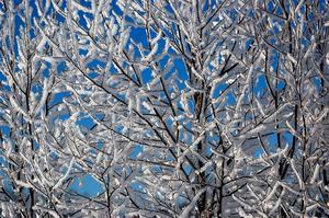 Bilden tagen en frostig vintermorgon med klar himmel som bakgrund.