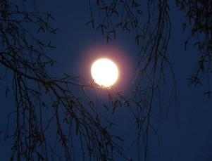 Den här bilden tog jag 120404 i Viksäng. Månen har många faser och en massa olika skepnader, det gäller bara att fånga stunden då Månen är på sitt bästa humör.