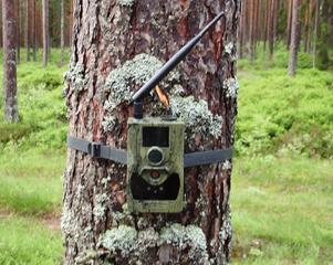Vid åtlarna hittades kameror som hade satts upp utan nödvändigt tillstånd från länsstyrelsen.