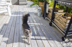 En av de två katterna flanerar längs altanen. Mjau!