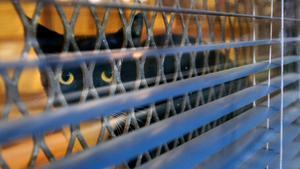 Om en person får ett djurförbud får den inte, enligt länsstyrelsen, äga djur, rasta djur, transportera djur, vårda eller sköta djur, utfodra eller vattna djur, arbeta med eller träna och inte ha ett faktiskt inflytande över hanteringen av djur.