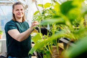 Aubergin och squash är två av en lång rad grönsaker som Sofia Engberg odlar. Till att börja med i växthus innan de planteras ut.