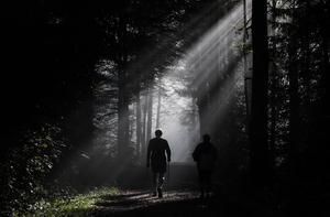 Skogen ger både motion och återhämtning.