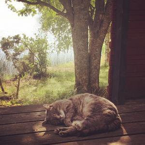 Katten Morsan kunde inte haft det bättre. Foto: Satu Vikman