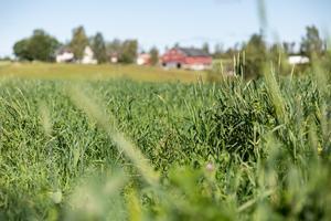 Jag tror att detkommer att bli en levande landsbygd igen med ett levande jordbruk som kan producera våra basvaror som alla behöver, skriver signaturen