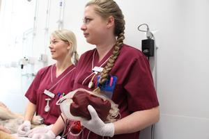 En påse blod som efter kontroll och centrifugering kan komma till nytta för hundar som är sjuka eller som råkat ut för olyckor.