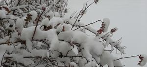 27 november kom det första riktiga snöfallet i Färila.