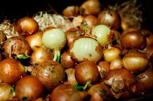 Dyrare lök väntar. LRF tror att svensk odling av morötter och lök kommer att förlora i konkurrenskraft när Kemikalieinspektionen förbjuder bekämpningsmedel.