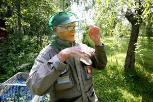 Även med mygghatt så är myggplågan svår tycker Hans Falk, då man går i ett moln av aggressiva översvämningsmygg