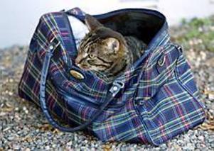 Foto: LASSE WIGERT Övergiven. Natten till söndagen lämnades en katt, instängd i en väska, utanför en radhusdörr på Rodergatan.