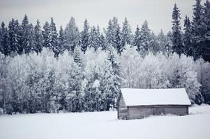 Vinterbild från november månad. Foto: Therese Stenman.