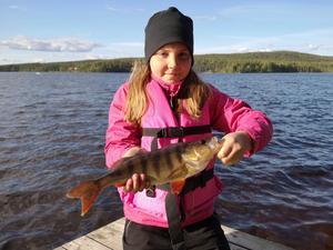 Ella Olsson tog den här abborren i Ängersjön.